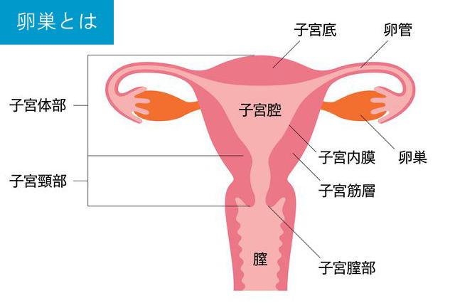 原因 卵巣 の 腫れ 卵巣が腫れて痛みが生じる原因と女性の健康を守る対処法